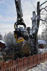 Nedmontering av träd nära hus