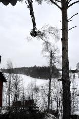 Fällning av träd nära fritidshus