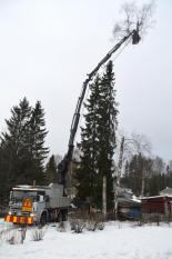 Nedmontering av träd mellan uthus