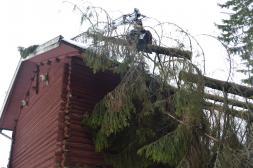 Bortplockning av träd som fallit