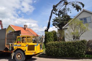 Nedmontering av gran i Borlänge