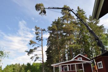 Trädlyft över sommarstuga vid Sunnanö i Borlänge