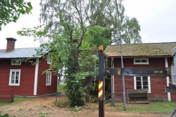 Bortplockning av avblåst alm i Hushagen, Borlänge