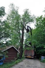 Trädfällning över hus översiktsbild