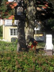 Nedmontering nära hus