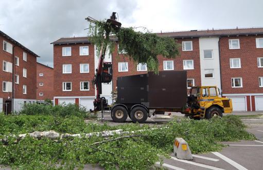 Bortforsling av trädavfall