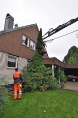 Närbild på trädfällning nära hus