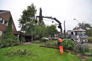 Trädfällning nära hus