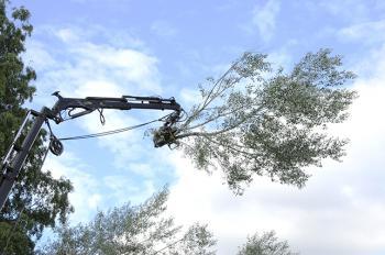 Fällning av träd